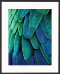 Exotic blue and green large feathers in frame art by designer boys
